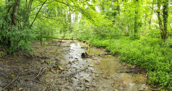 ruisseau de la fontaine vilcey sur trey